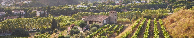 vinos Bouquet d'Alella, comprar vino