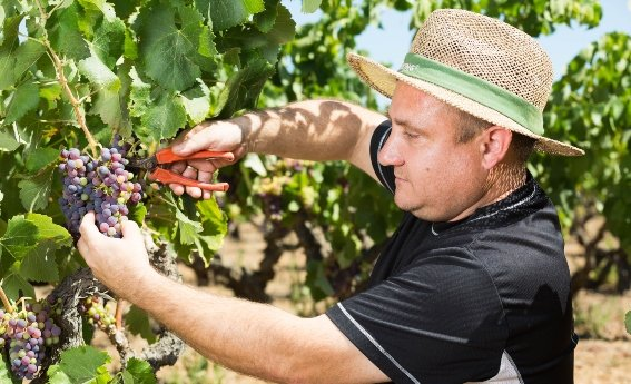 Vinos Bellmunt & Oliver Viticultor