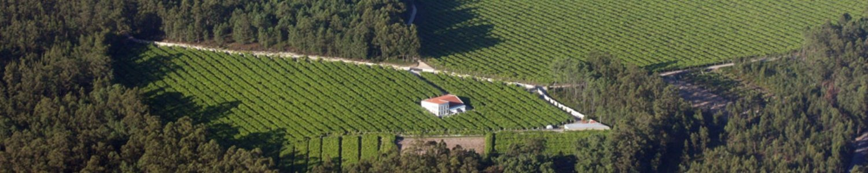 vinos don olegario